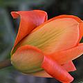 Orange Lady by Felicia Tica
