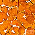 Orange Leaves by Kathleen Smith