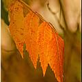 Orange Leaves Of Fall by LeeAnn McLaneGoetz McLaneGoetzStudioLLCcom