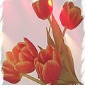 Orange Light by Debra  Miller
