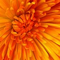 Orange Light by Nona Kumah