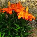 Orange Lilies by Laura Corebello