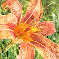 Orange Lily by Claire Bull