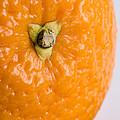 Orange by Nigel R Bell