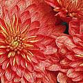 Orange Petals by Jaki Miller