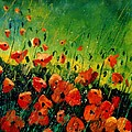 Orange Poppies  by Pol Ledent