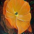 Orange Poppy by Magdalena Morataya