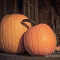 Orange Pumpkins by Lucid Mood