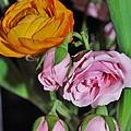 Orange Ranunculus And Pink Roses by Mimi Saint DAgneaux