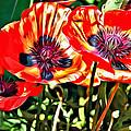 Orange Rhapsody by Alice Gipson