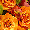 Orange Roses by Amy Vangsgard