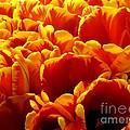 Orange Sea by Lauren Leigh Hunter Fine Art Photography
