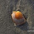 Orange Seashell by Michael Mooney