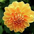 Orange Sun by Christiane Schulze Art And Photography