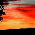 Orange Sunrise by Pamela Walton