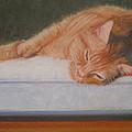 Orange Tabby Cat by Sarah Parks