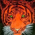 Orange Tiger by Justin Moore