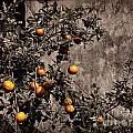 Orange Tree On Rustic Background by Oleksiy Maksymenko