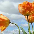 Orange Tulip Flowers Art Prints Tulips Floral by Baslee Troutman