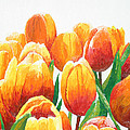 Orange Tulips by Chris Torre