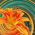 Orange Twist Daylily Photoart by Debbie Portwood