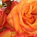 Orange Utopia Roses by Amina Bentivegna