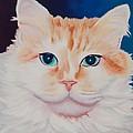 Orange White Cat Portrait by Robyn Saunders