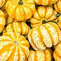Orange Winter Squash On Display by John Trax