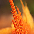 Orange Wood Fragment On Stump by Ana Seminario