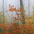 Orange You Glad by Juergen Roth