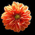 Orangeman by Doug Norkum