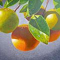 Oranges by Carey Chen