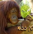 Orangutan Female by Carolyn Marshall