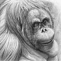 Orangutan - Pongo Pygmaeus by Svetlana Ledneva-Schukina