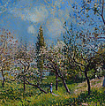 Orchard In Spring by Mountain Dreams