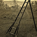 Orchard Ladder by Edward Fielding