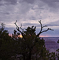 Orchestrating A Sunset At The Grand Canyon by John M Bailey