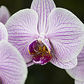 Orchid #4 by Phil Abrams