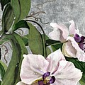 Orchid A - Phalaenopsis by Mitzi Lai