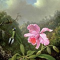 Orchid And Hummingbirds by Martin Johnson Heade
