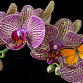 Orchid And Orange Butterfly by Garry Gay