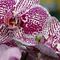 Orchid Art by Greg Patzer