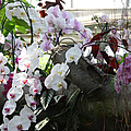 Orchid Branch by Christiane Schulze Art And Photography
