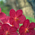 Orchid Bugs by Kathi Shotwell