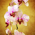 Orchid Cascade by Andee Design