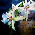 Orchid Cascade by Marcia Breznay