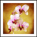 Orchid Cascade Square by Andee Design
