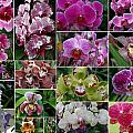 Orchid Collage 1 by Allen Beatty