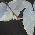 Orchid Dance II by Mary Louise Ringers