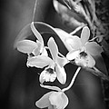 Orchid Delight by Lori Seaman
